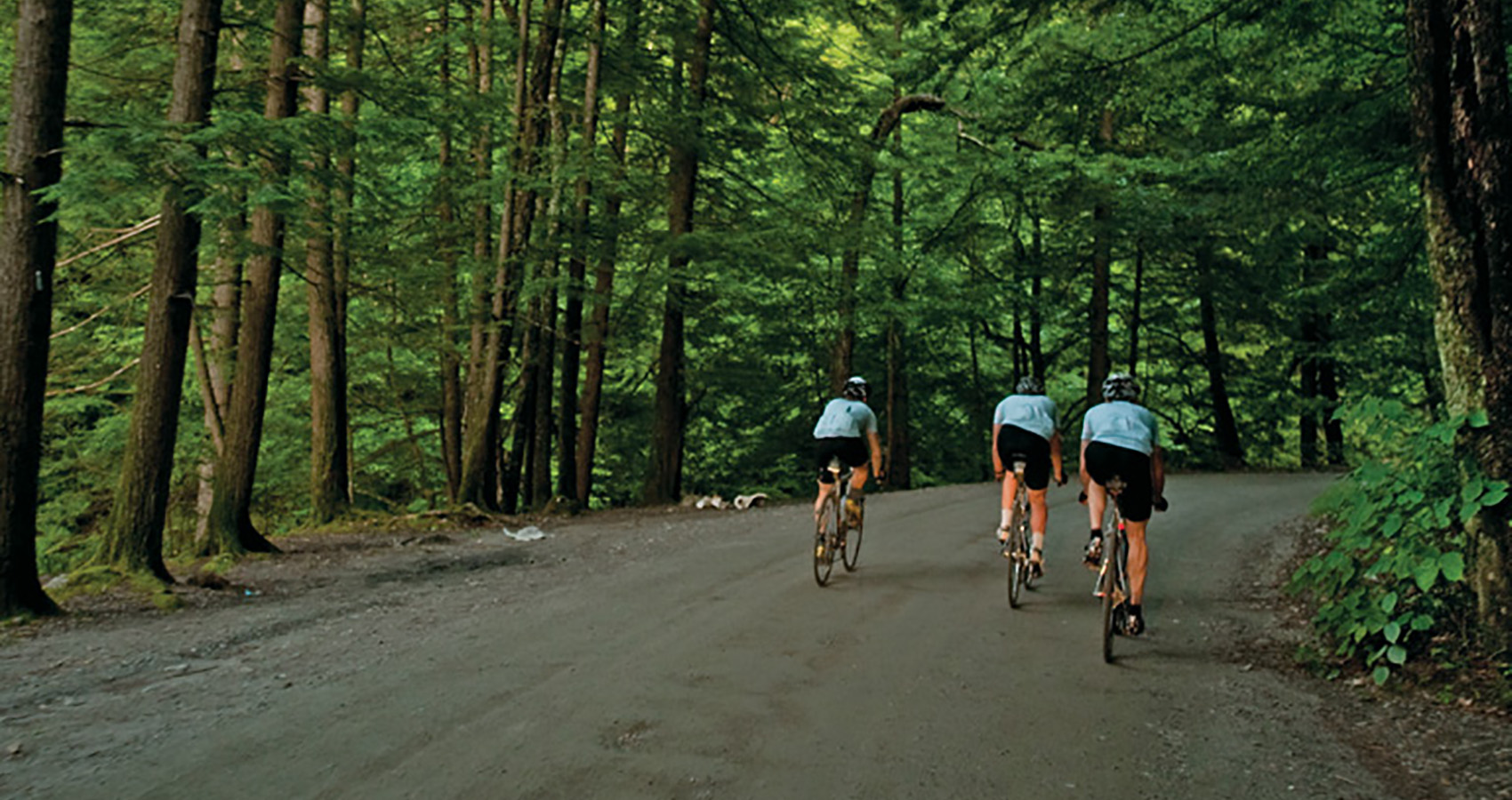 three cyclists moving fast down a forest road